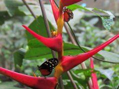 Mariposas en orquídea