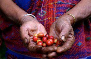 café ecosostenible RIU Hotels