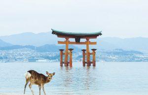 Japón guia 100 experiencias únicas Oficina Nacional Turismo Japón